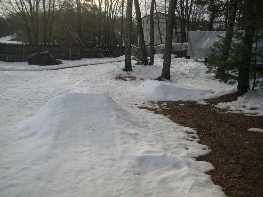 My dying backyard...