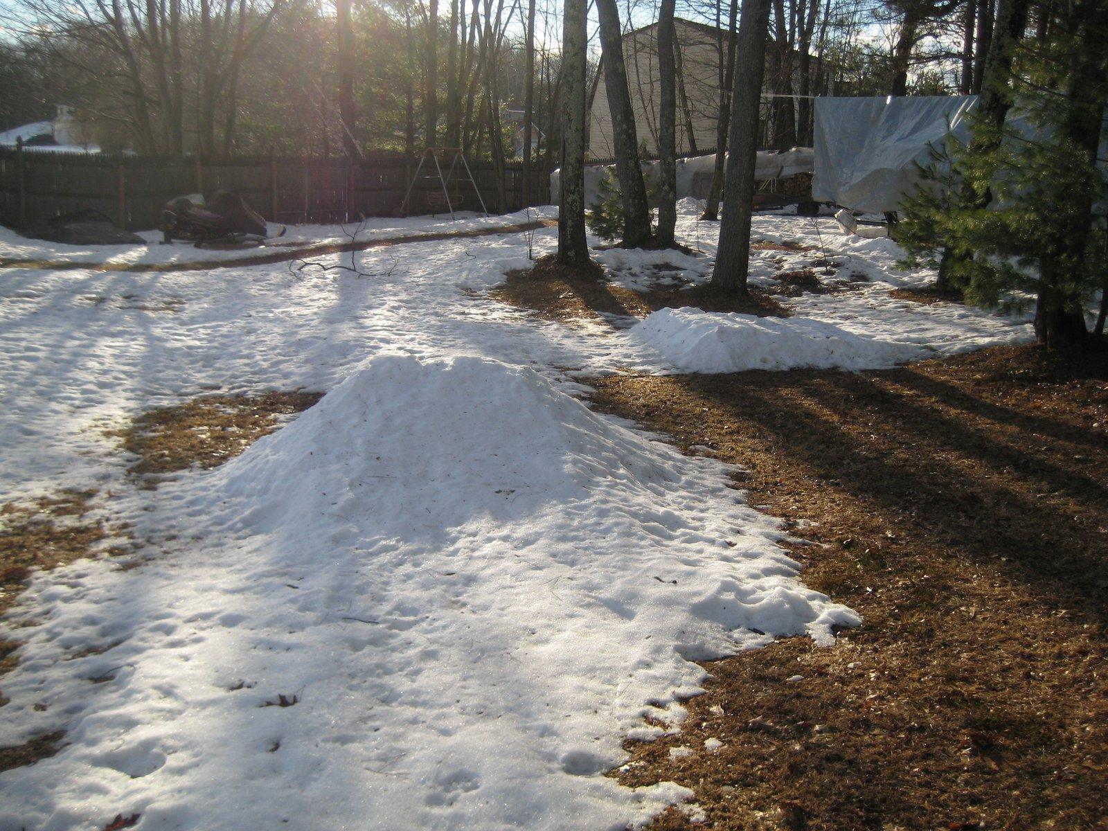 My dead backyard...
