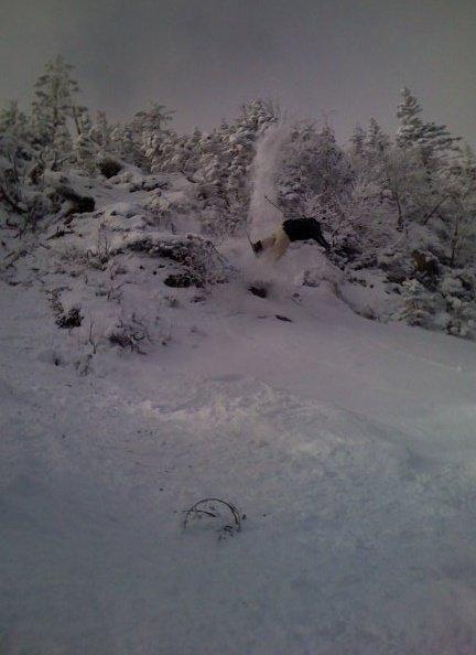 Branch under snow=