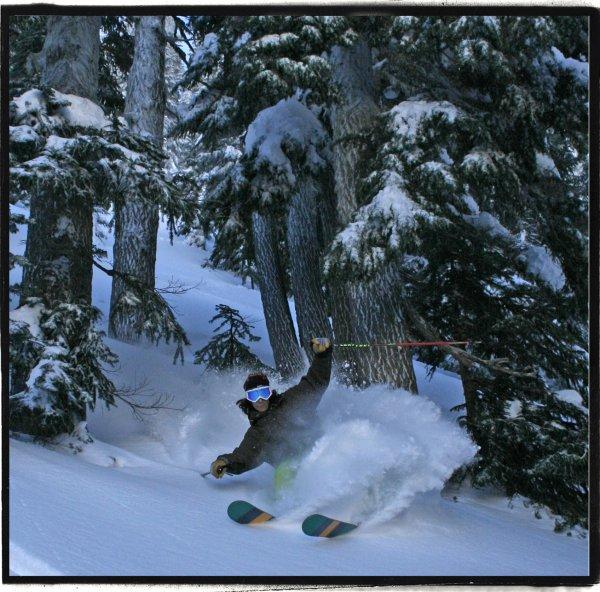 Tree skiin