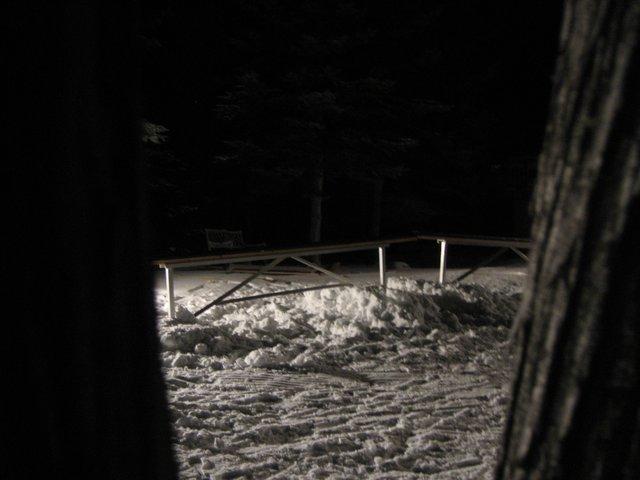 Cedar frontyard=magic