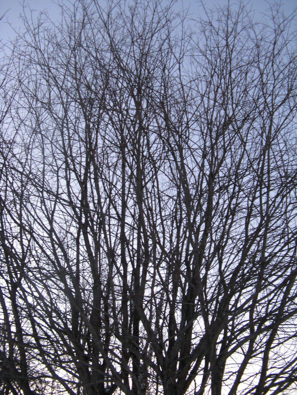 Clusterd tree