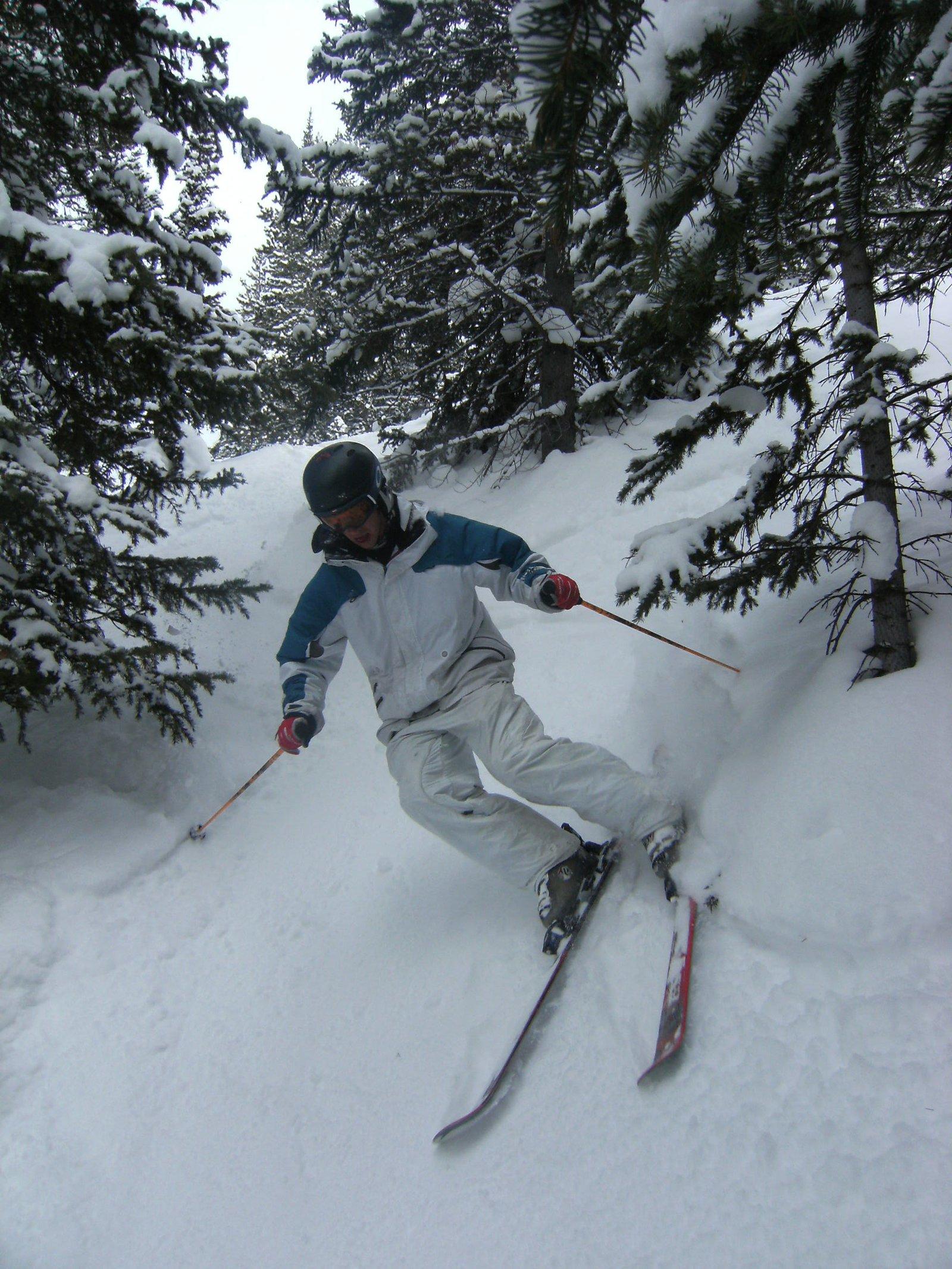 Tree skiing
