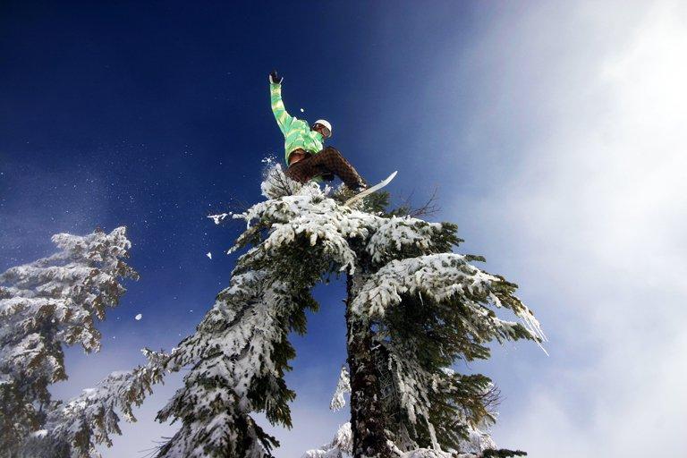 Snowboarder tree tap