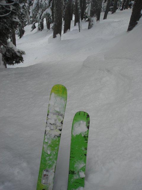 Alpental Tree Line