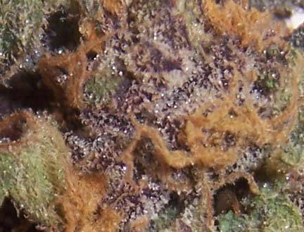 Bluemoonshyn