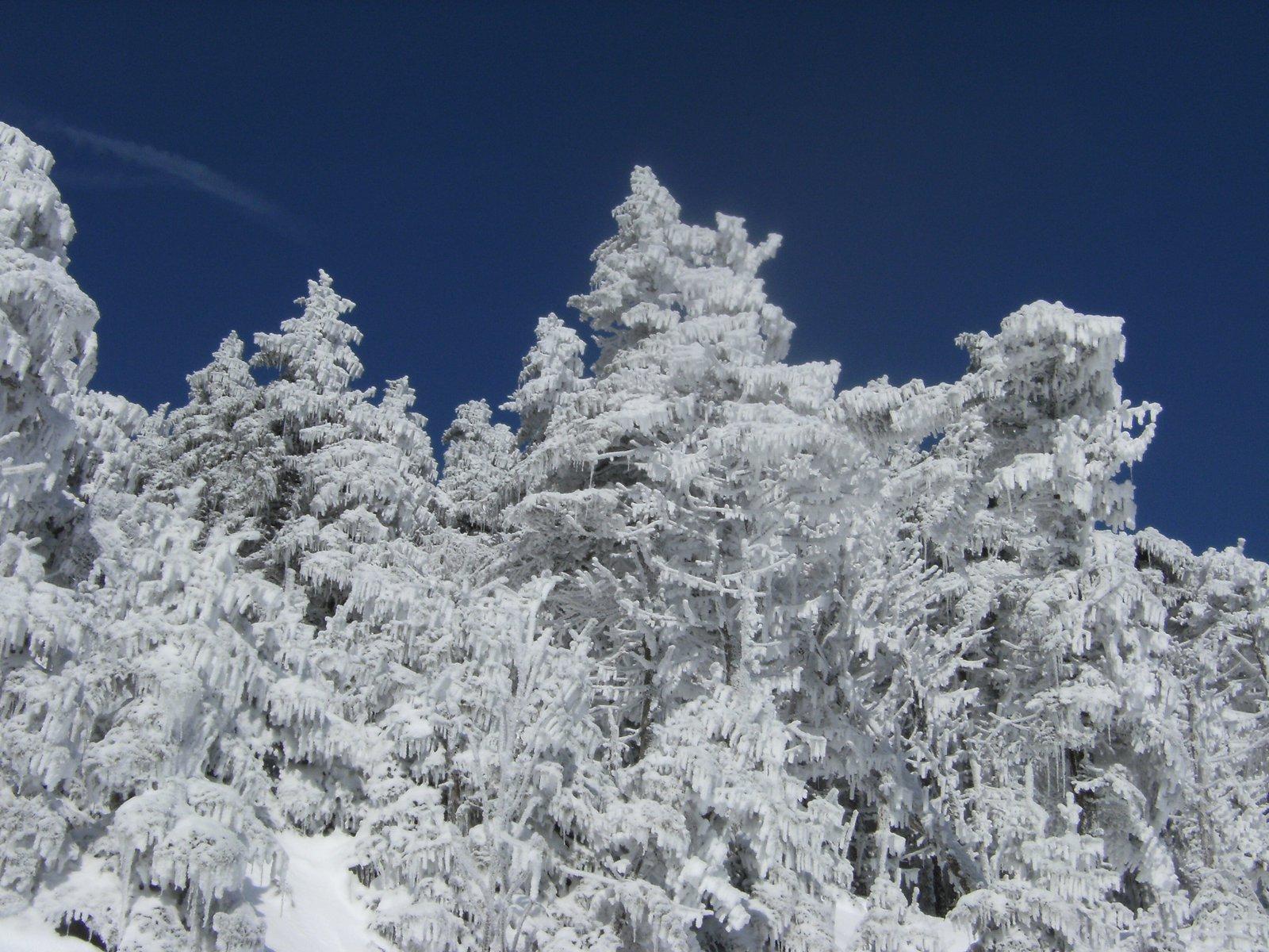 Snow...yea