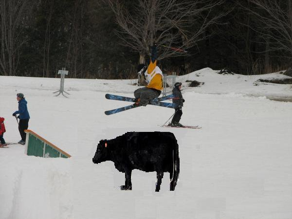 180 over cow