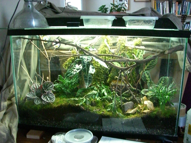 Mantis Home
