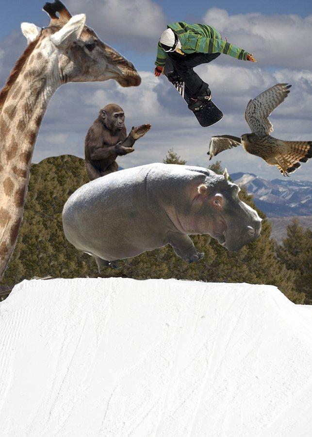 Hippo jib