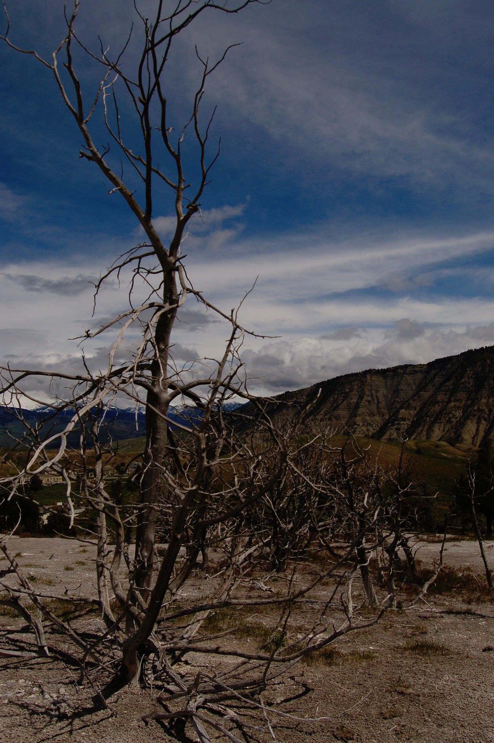 Yellowstone - 1 of 4
