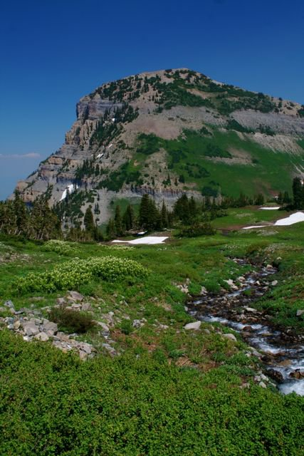 High meadow timpinogas