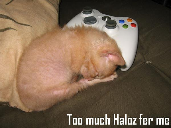 Haloz kitty