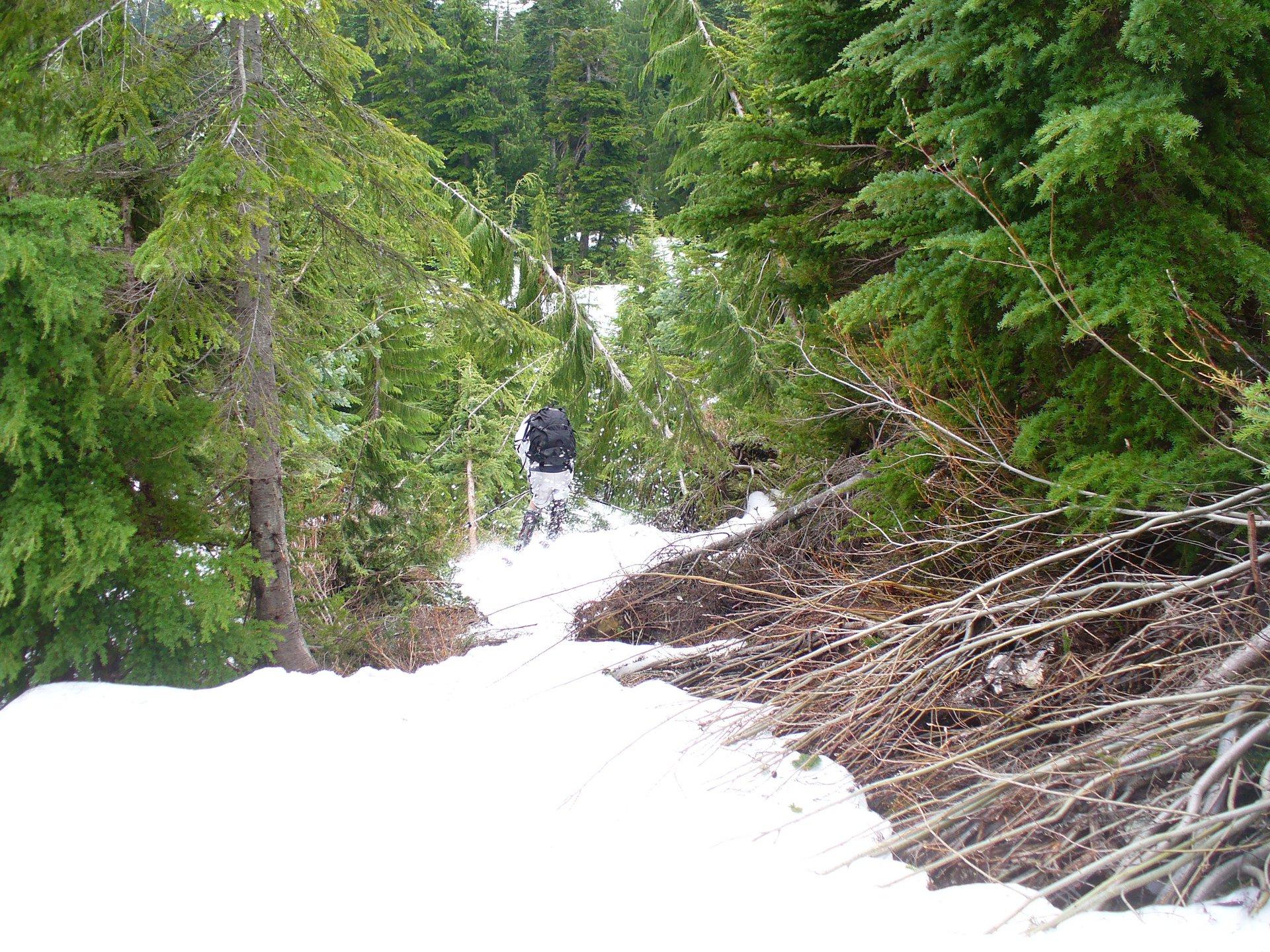 Summer Tree Skiing
