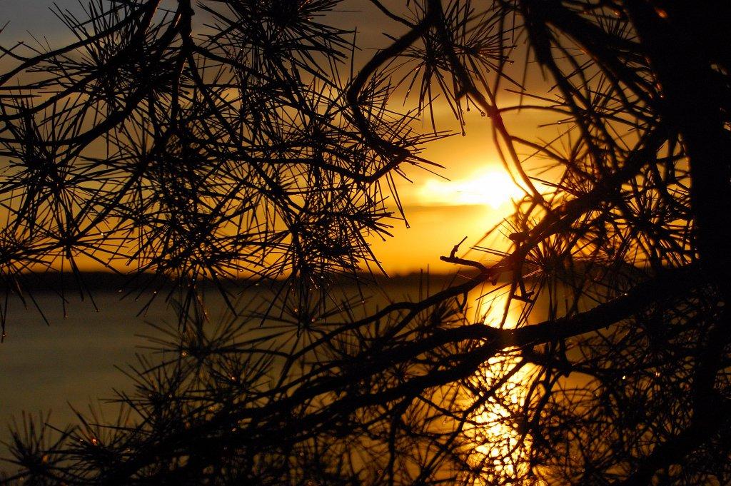 Sunset eel bay
