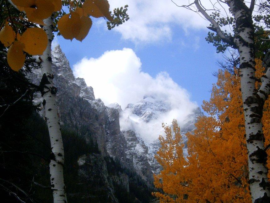 Teton aspens