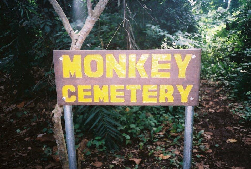 Poor monkeys