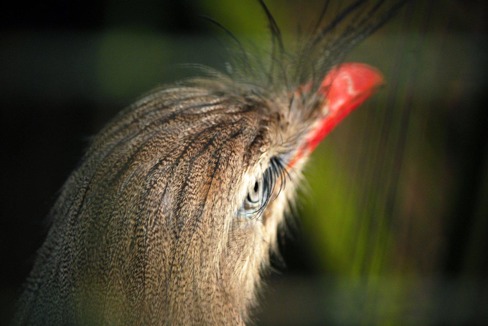 Big(ger) Bird