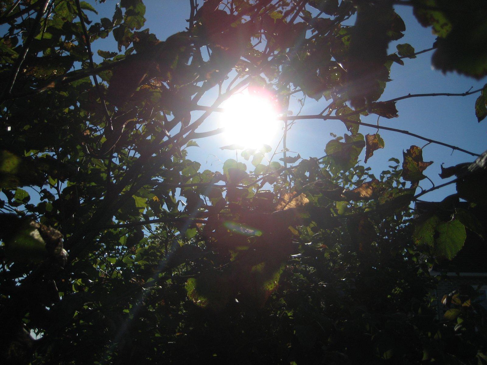 Sun in the leaf