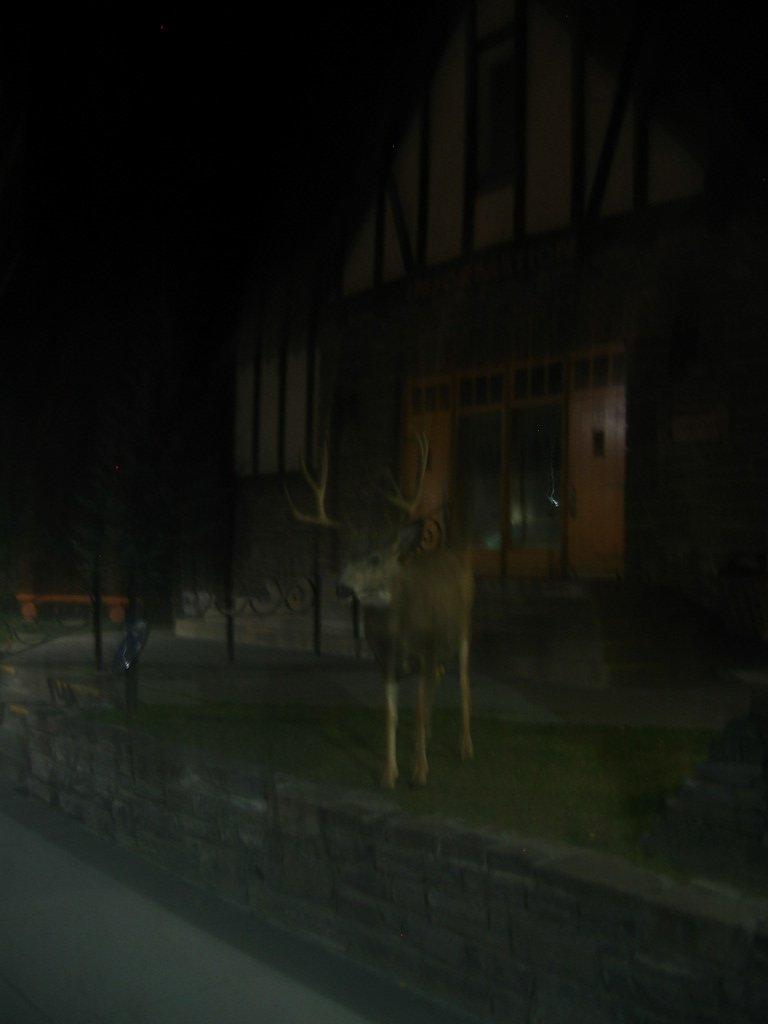 Mr.deer goes to town