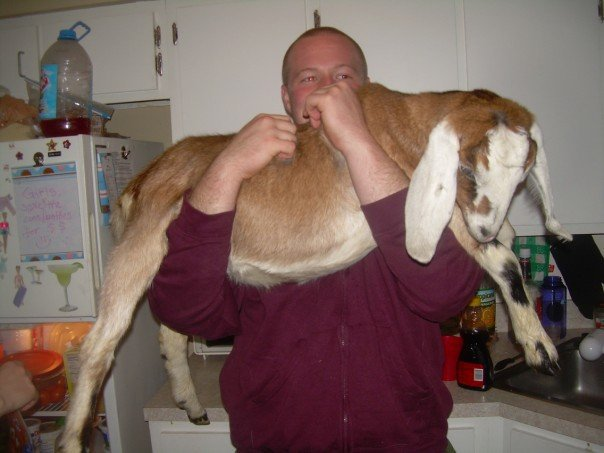 Sometimes your drunk enough to steal a goat....