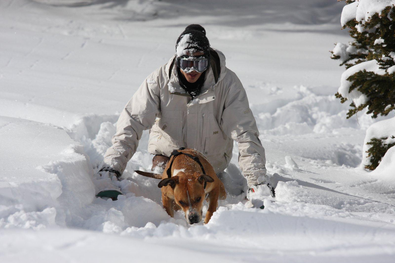 Backcountry dogg