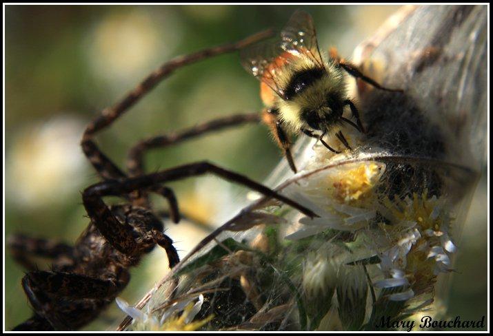 Bye Bye Bumblebee