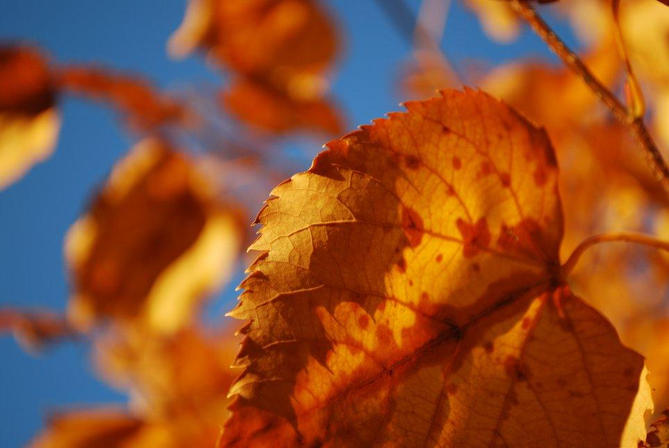VT foliage