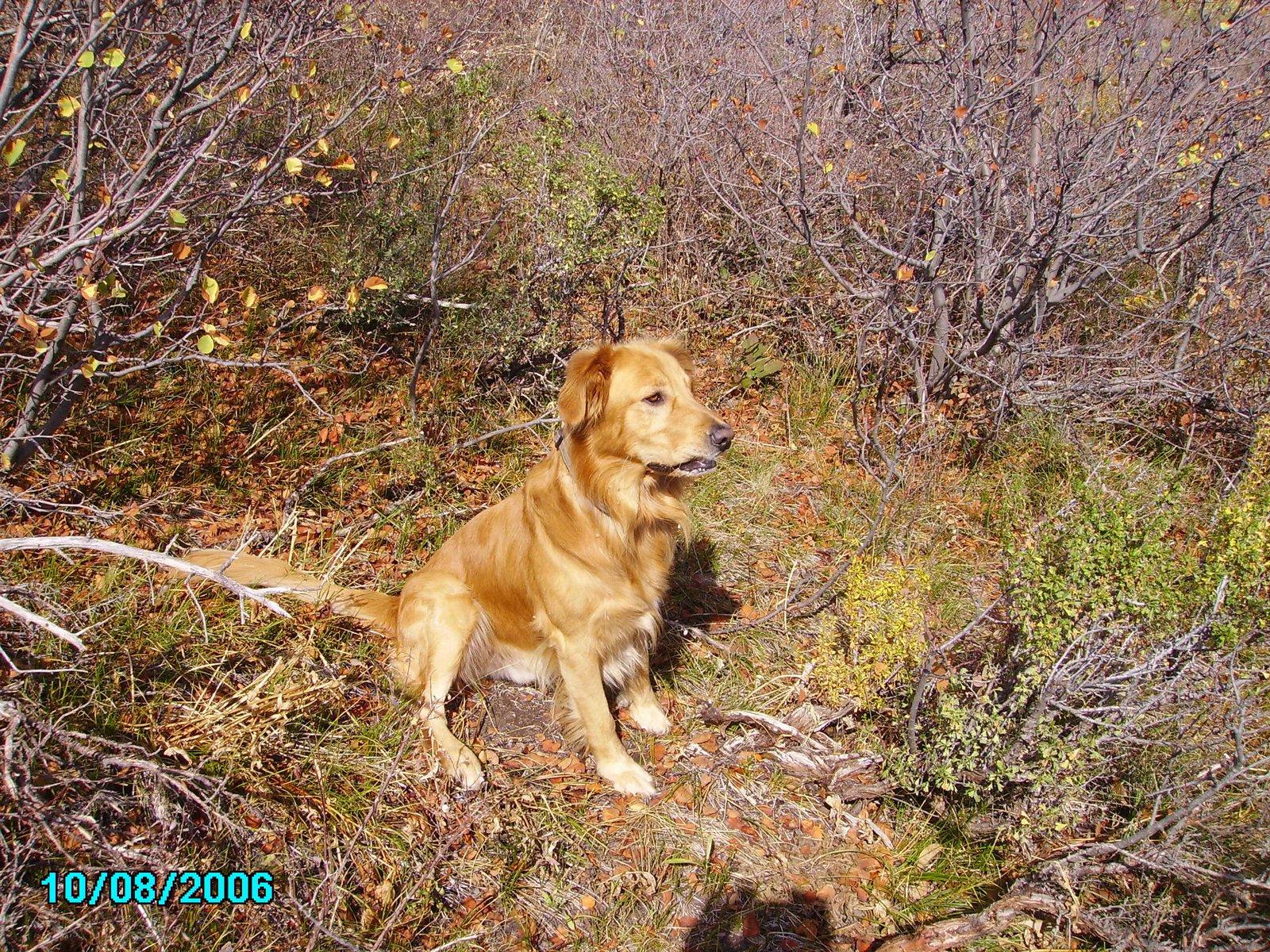 My hound