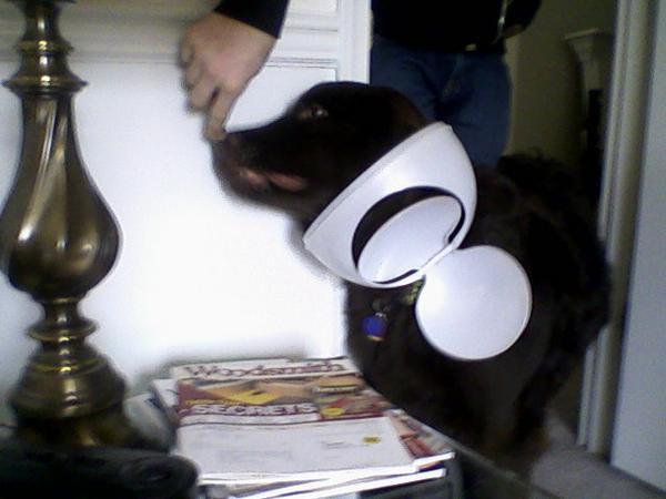 My dog roxy