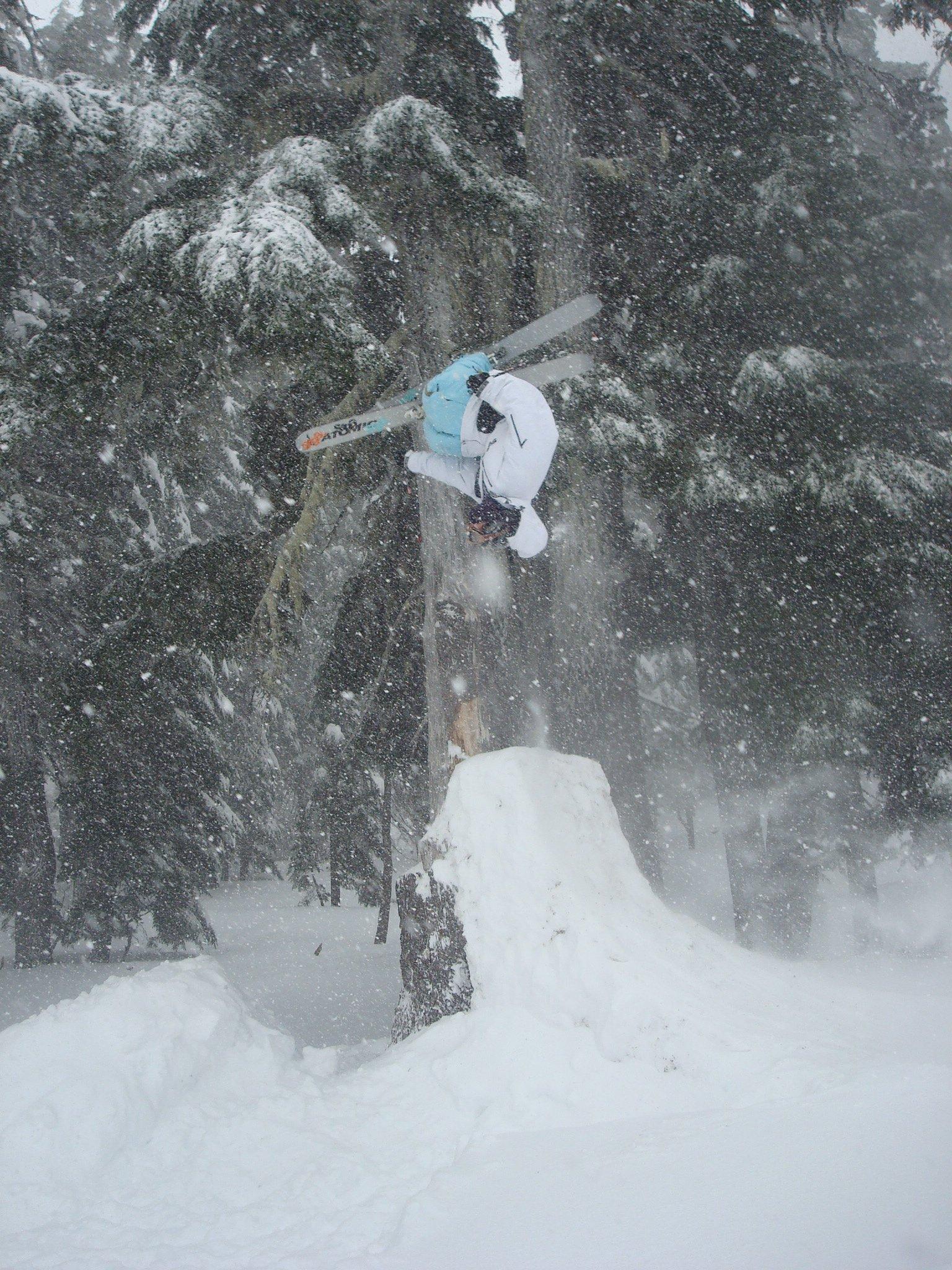 Upside down treee