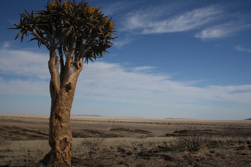 Fever Tree Namibia