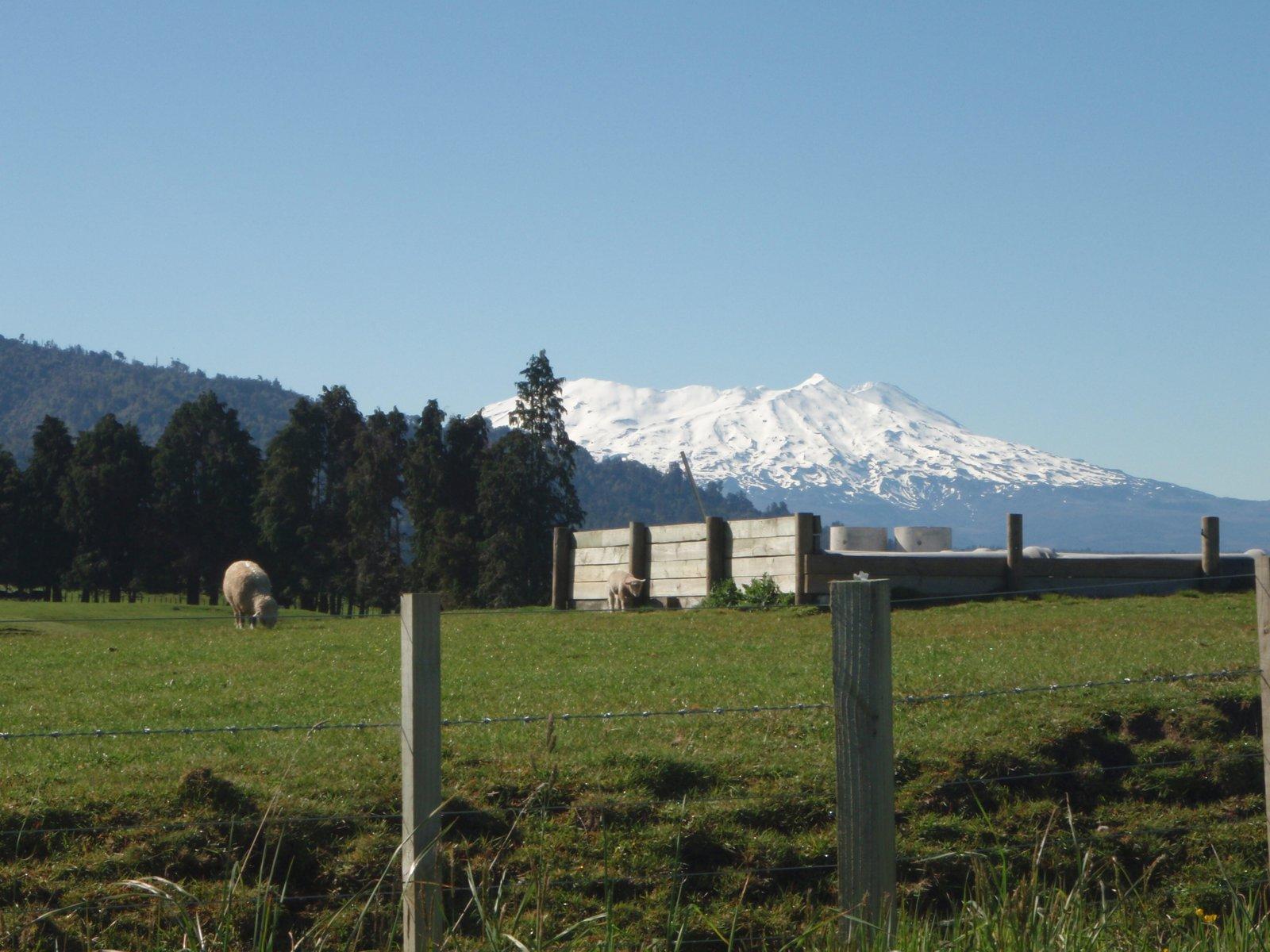Cliche photo of NZ Summer Skiing