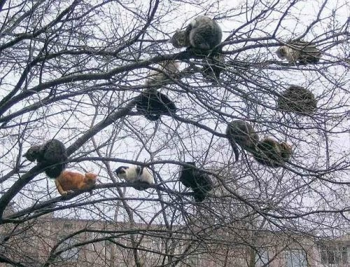 Tree of cats