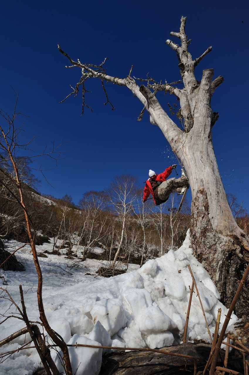 Tsubasa tree ride in niseko