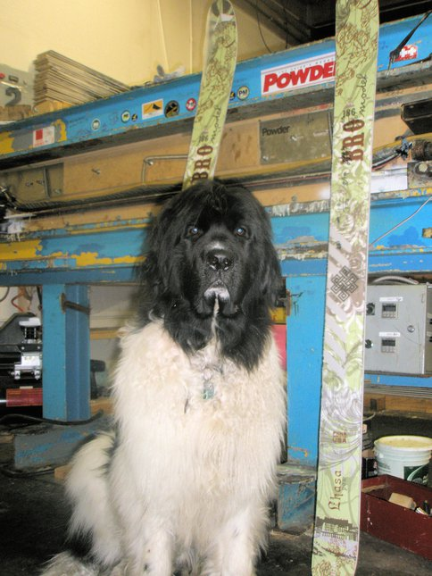 Big dog @ the ski factory
