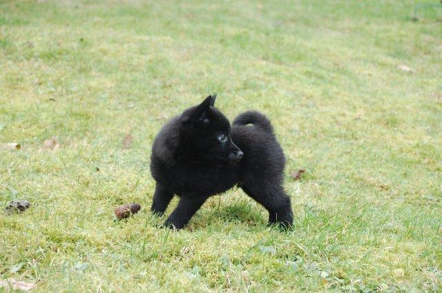 My mischievous doggie