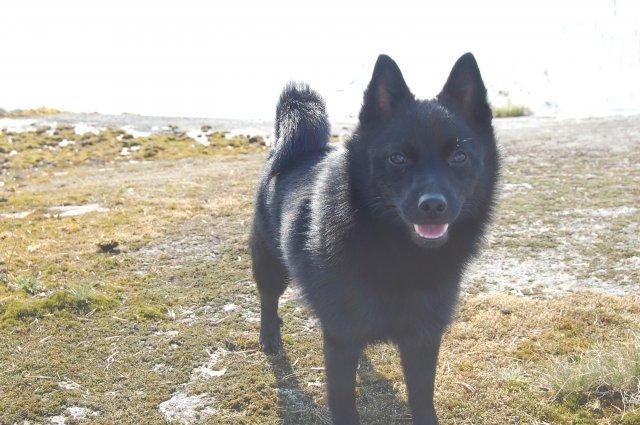 My smiling doggie