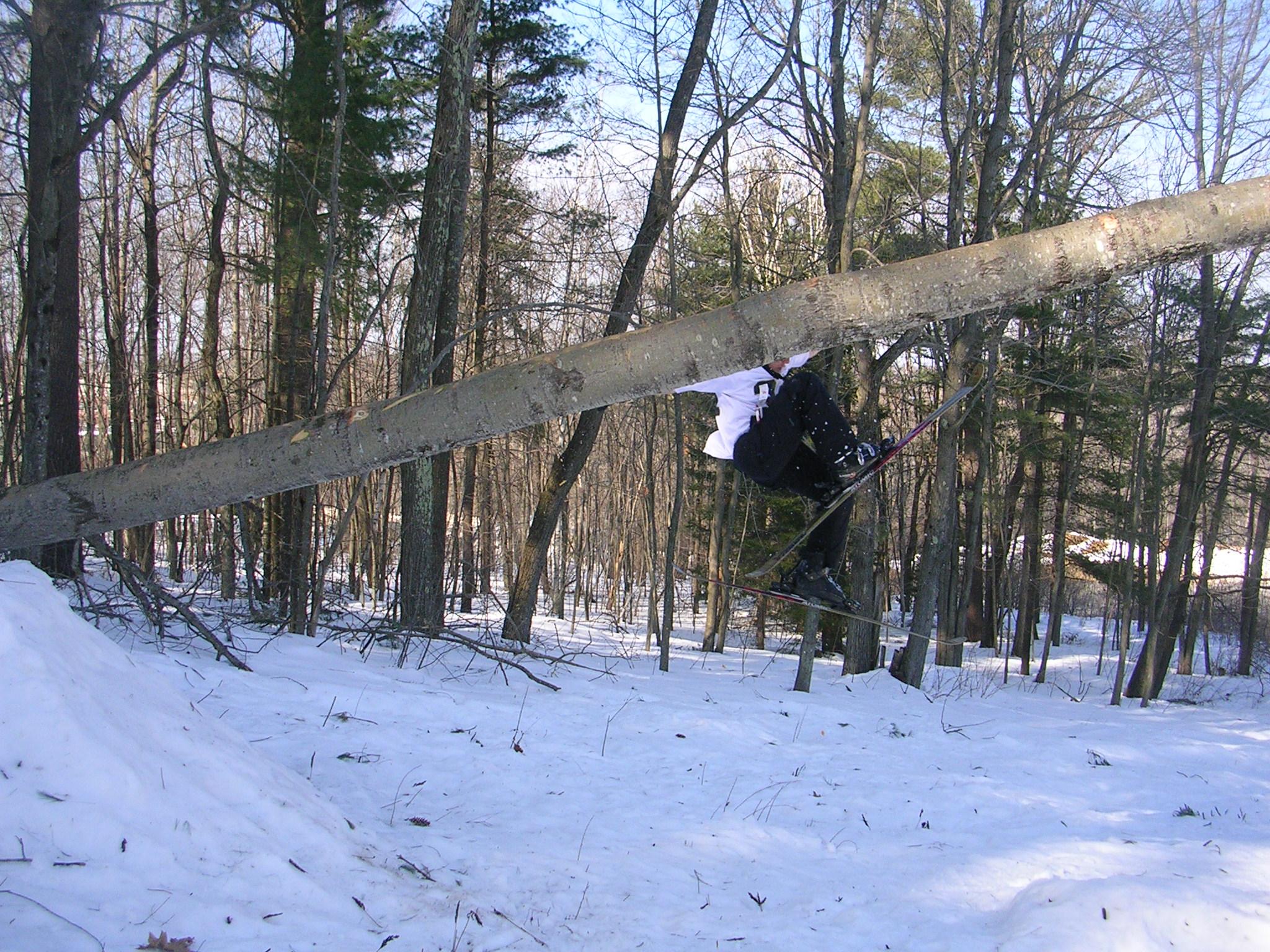 Tree bonk gone bad