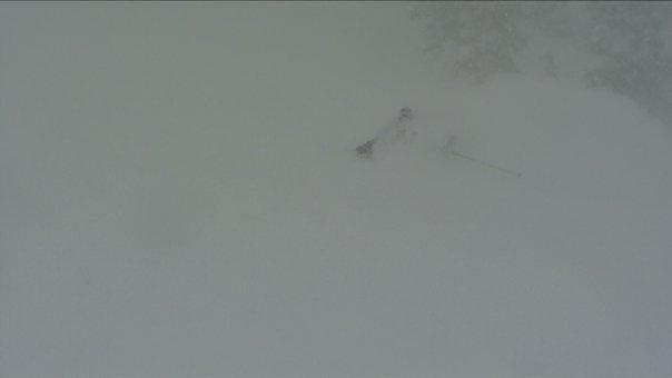 Snowbird Again