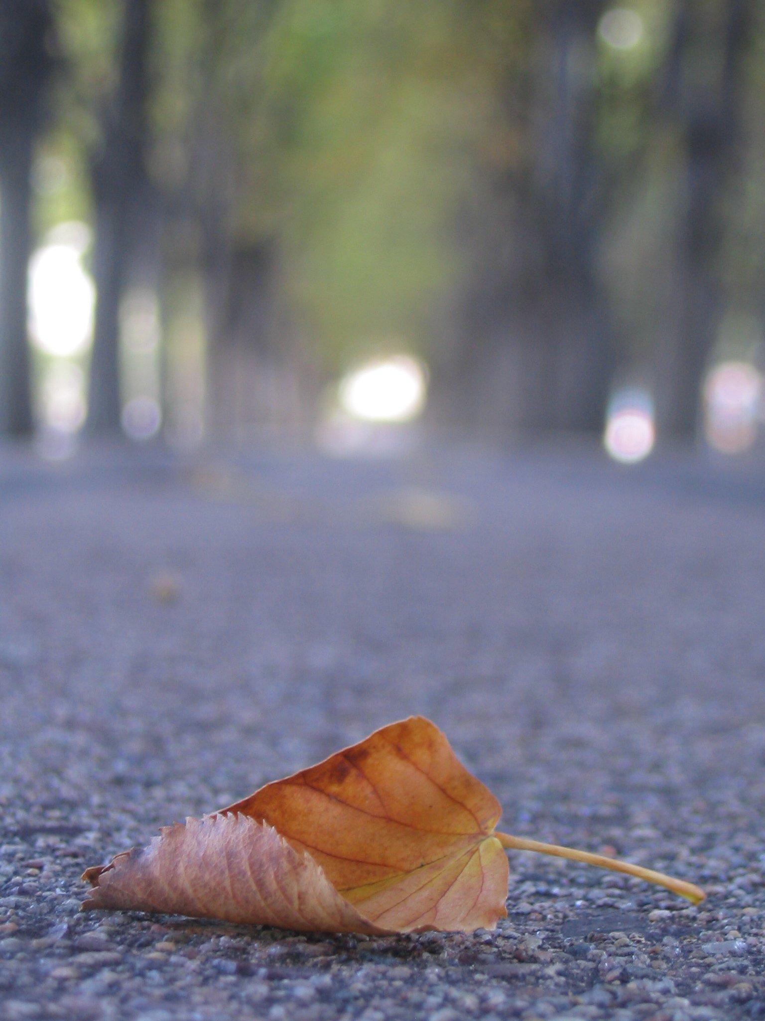 A leaf I took a picture of - sweeeeeeeeeeet
