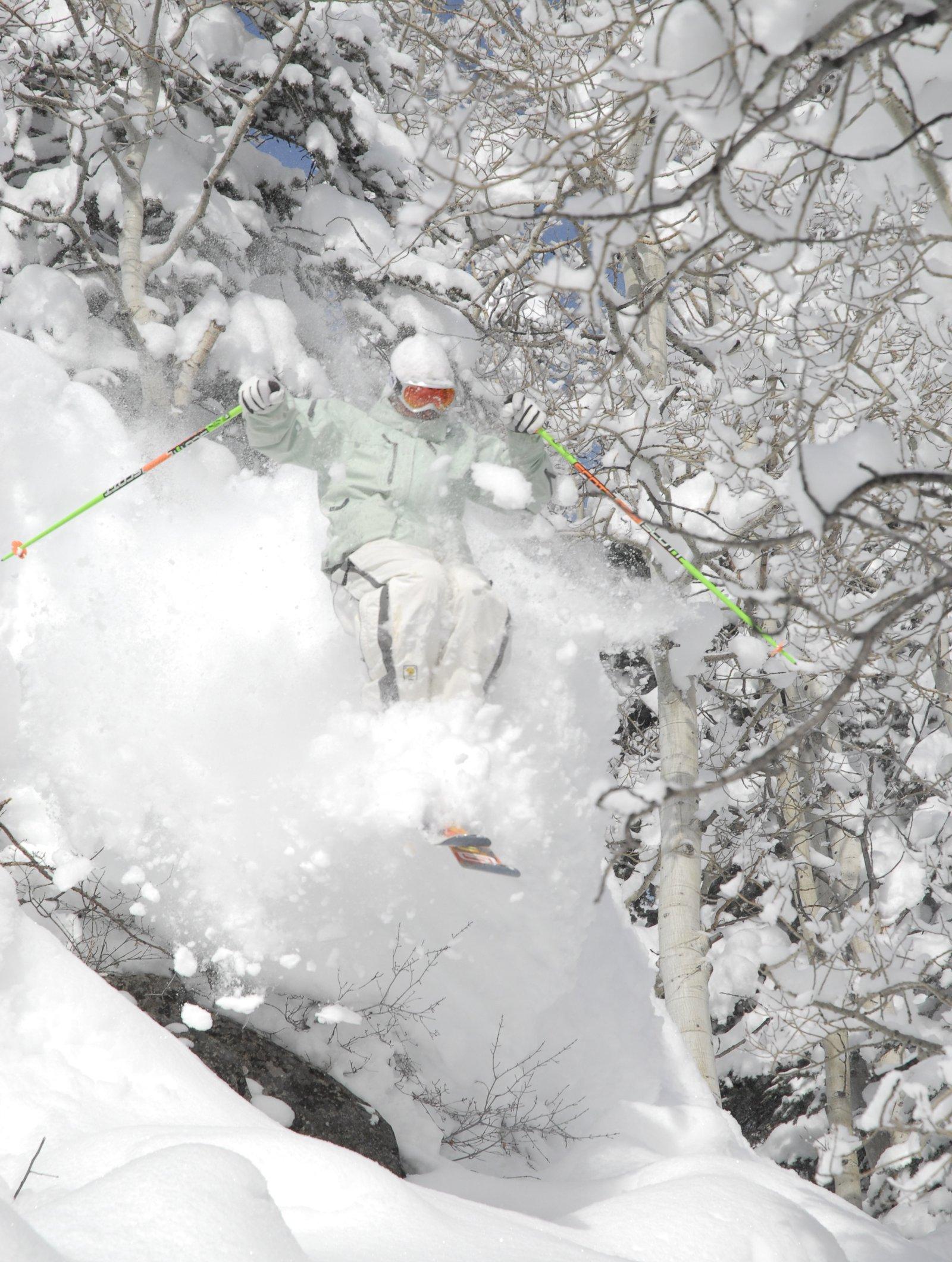 Crazy snow trees
