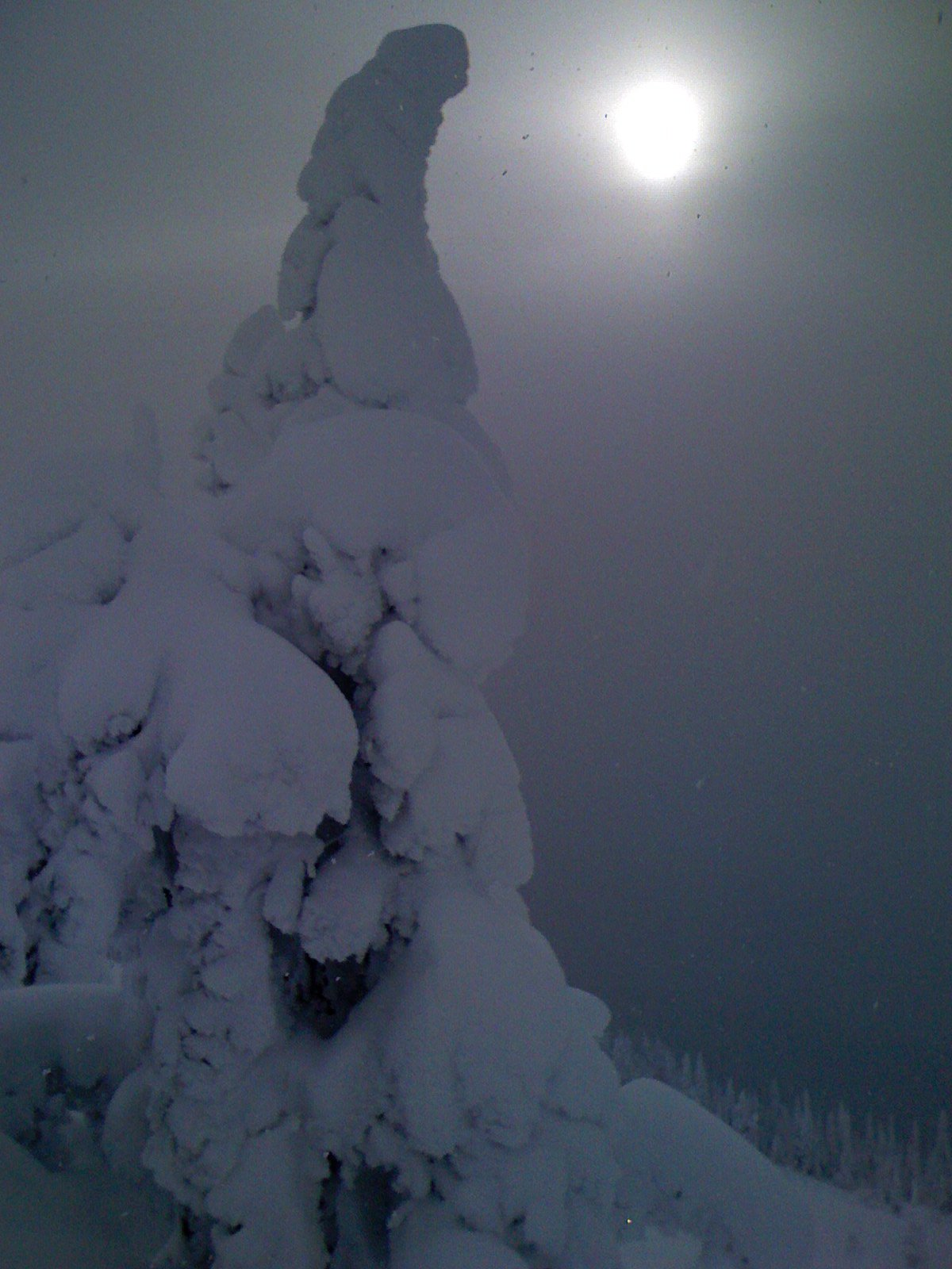 A tree covered in snow