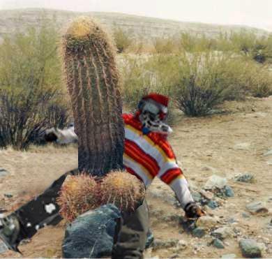 Toddi cactus