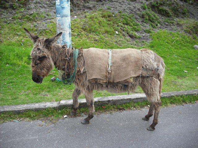 Saddest donkey ever