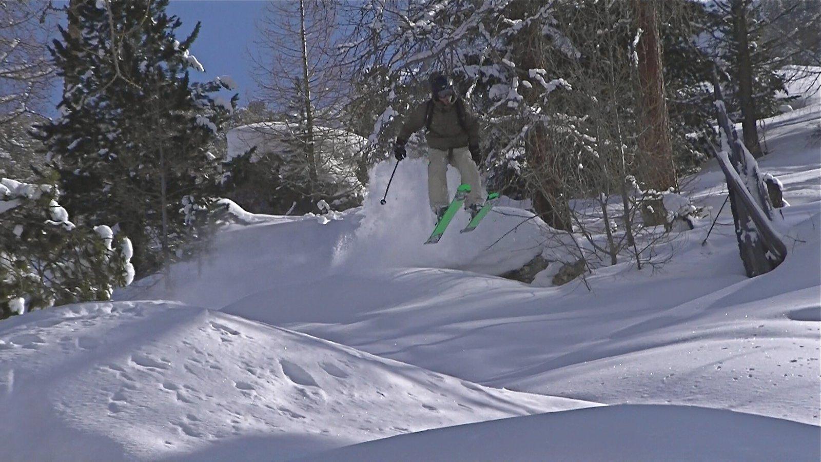 Little Jump Forrest
