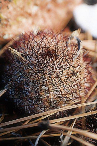Edited Cactus