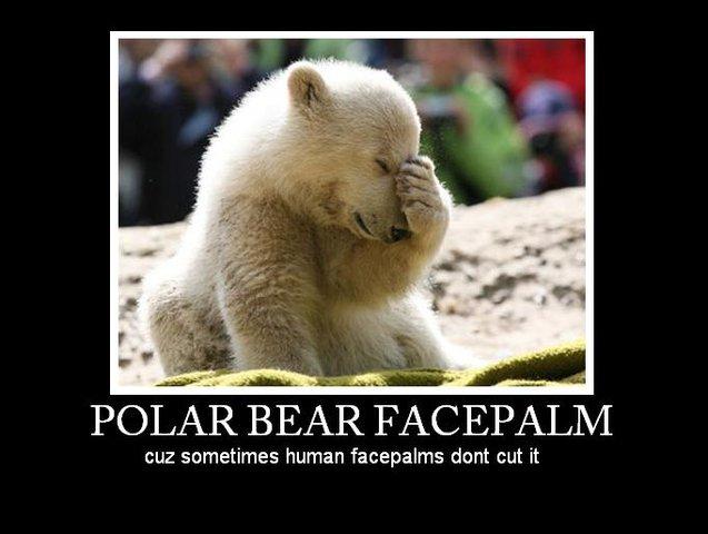 Knut facepalm