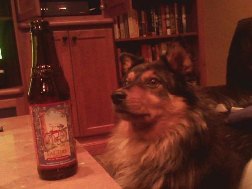 Dog   Beer!