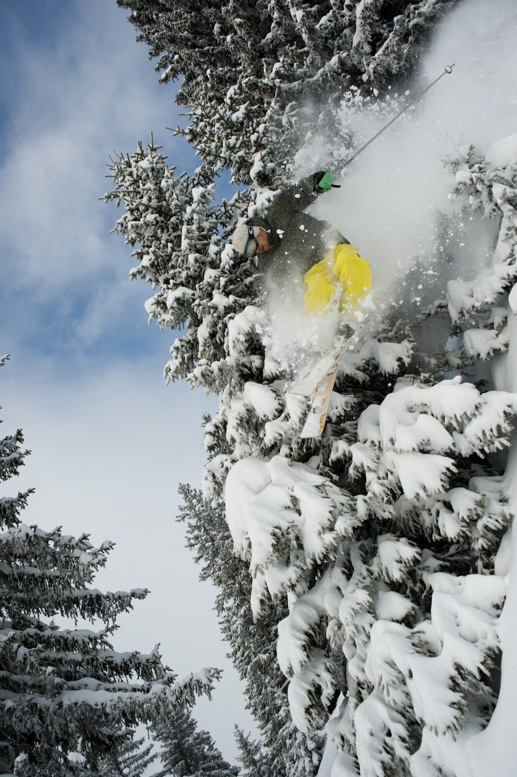 Tree riding